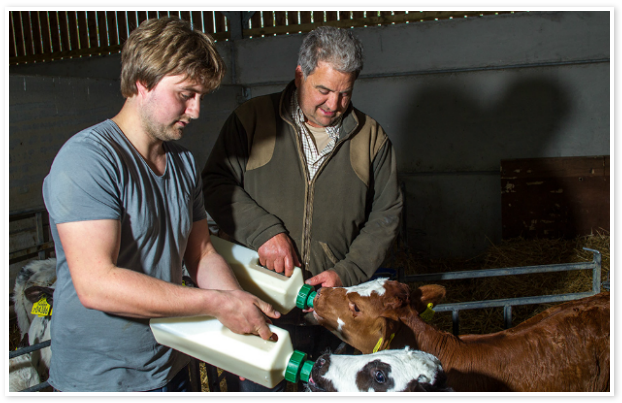 Ian and his son Tom bottle feeding their cows