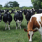 All about dairy farming